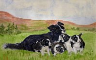 Jennifer Ball: Border Collie and Pups