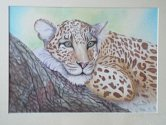 Restful Leopard - Colour Pencil - Dora Carrington